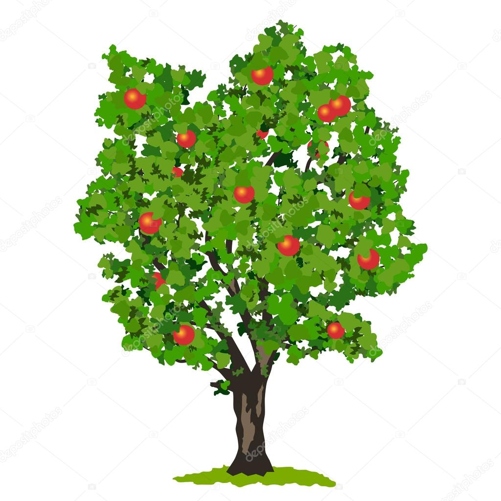 Tree With Fruits Part - 15: Apple Tree With Fruits. U2014 Vector By Ulvur