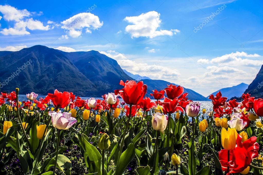 Картинки цветы и горы