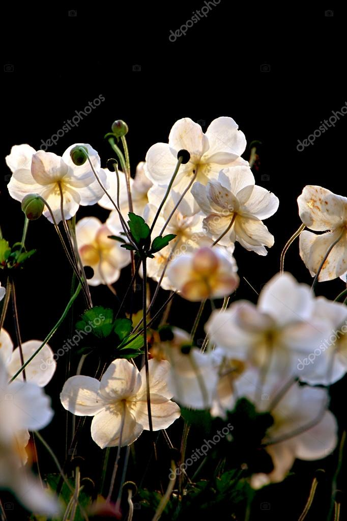 : White flowers