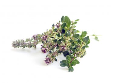Bunch of fresh herbs thyme