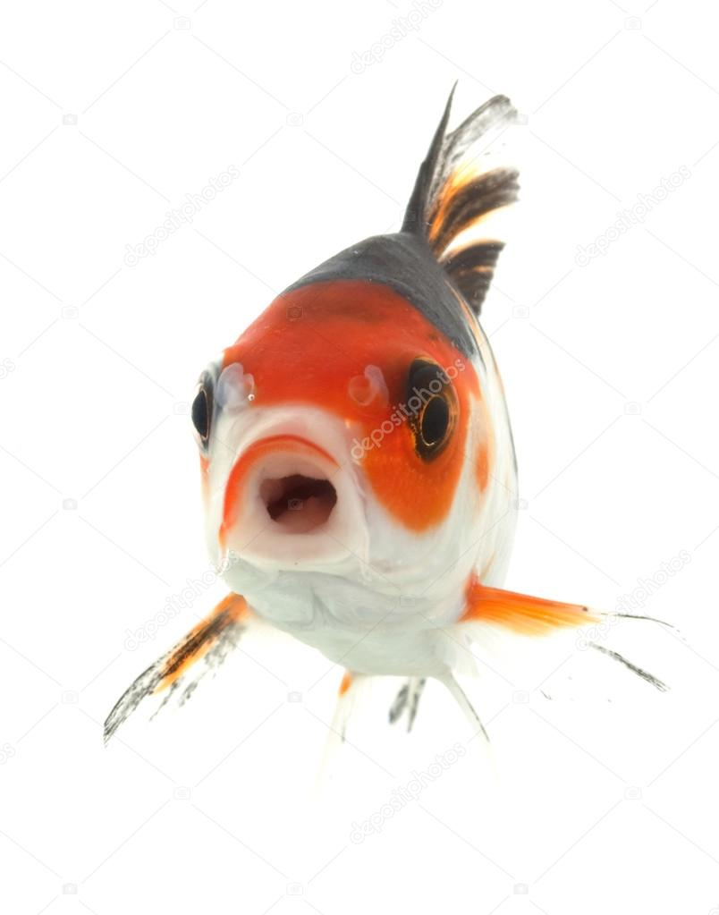 Mix-colored Koi — Stock Photo © fivespots #25763997