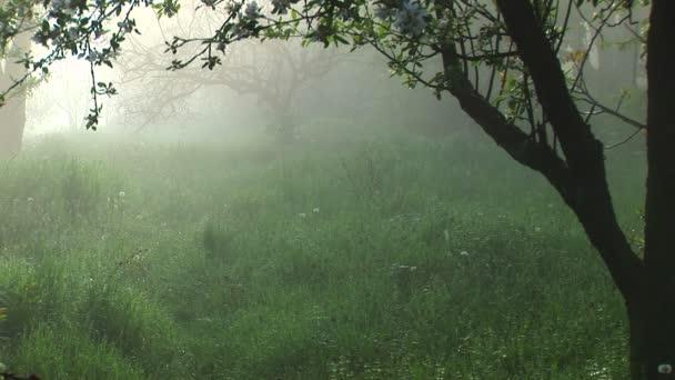 mlhavé ráno v zahradě. ticho a klid!