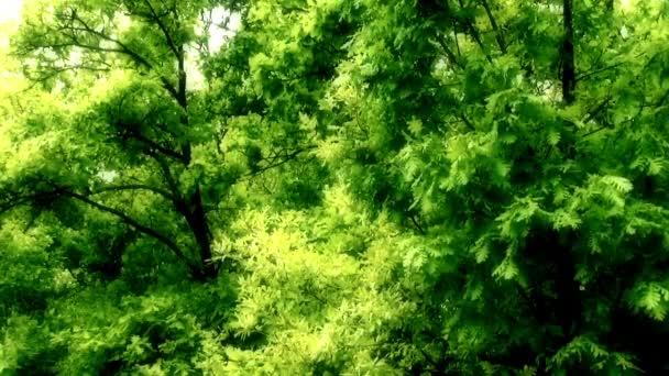 krásná pohádka lesa
