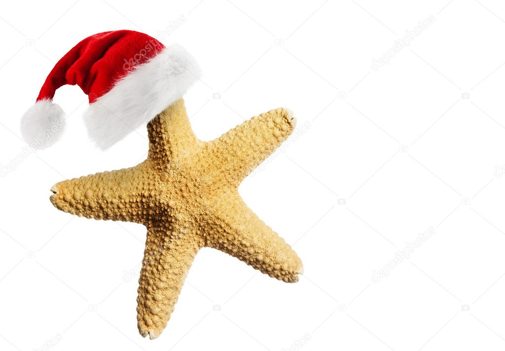 stella marina, cappello babbo natale, giallo, bianco, rosso, arancione