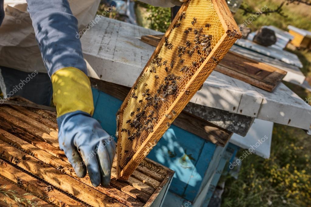 apiculteur 57