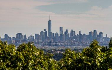 Lower Manhattan behind Bushes