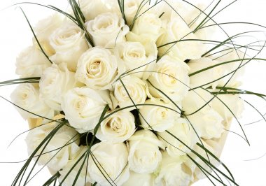 A large bouquet of white roses. A huge bouquet of cream roses. The isolated image on a white background. stock vector