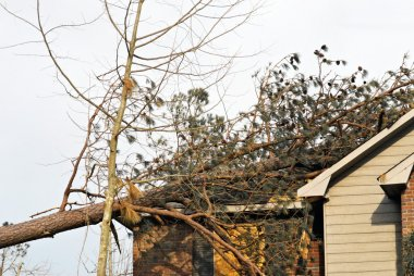 Tree on Roof