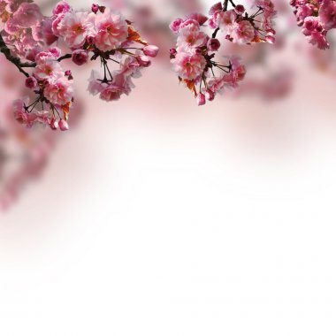 Blooming sakura on the blurred background stock vector