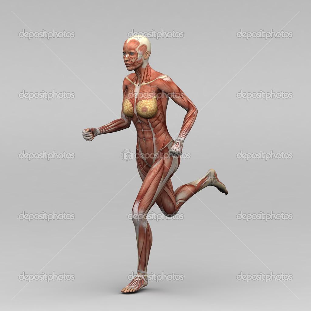 músculos y anatomía femenina — Foto de stock © newartgraphics #19873615