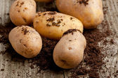 Photo Potatoes in soil