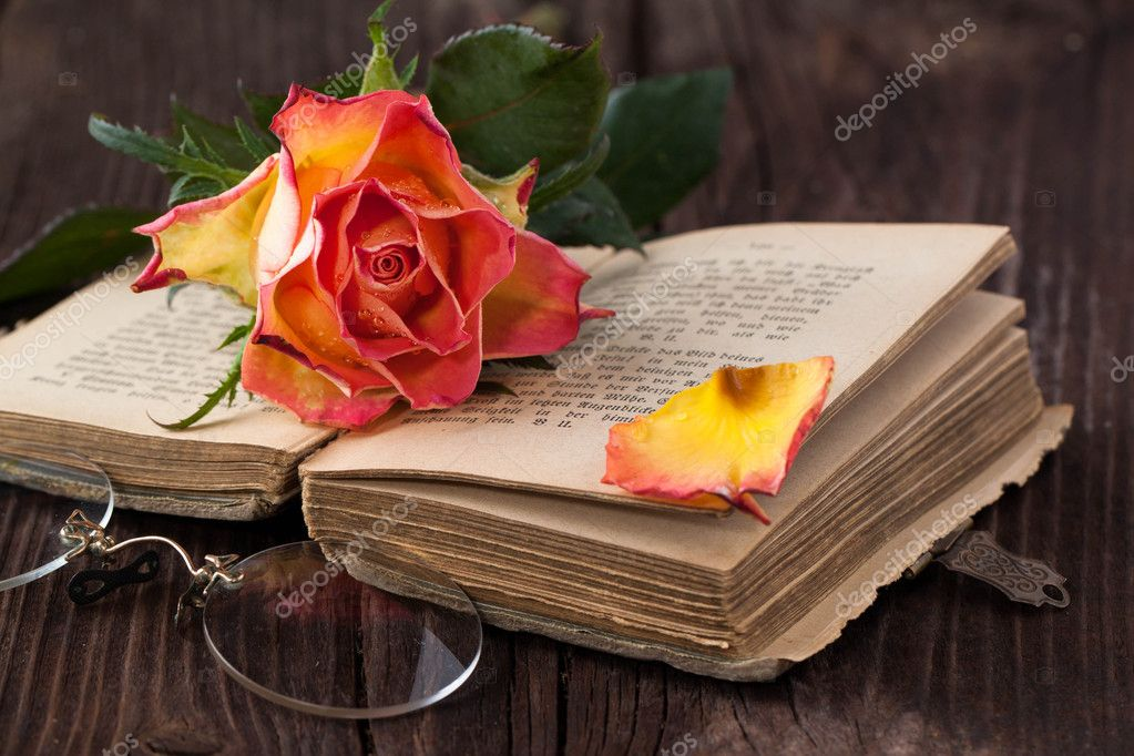 Orange rose with old book and glasses