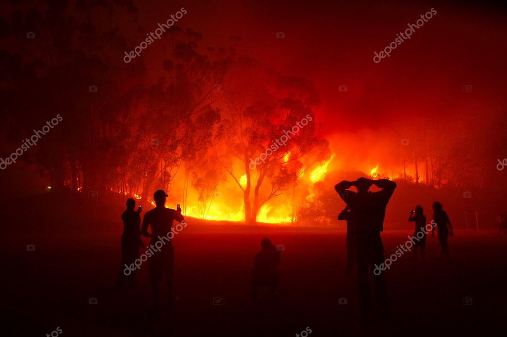 watching forest fire in night