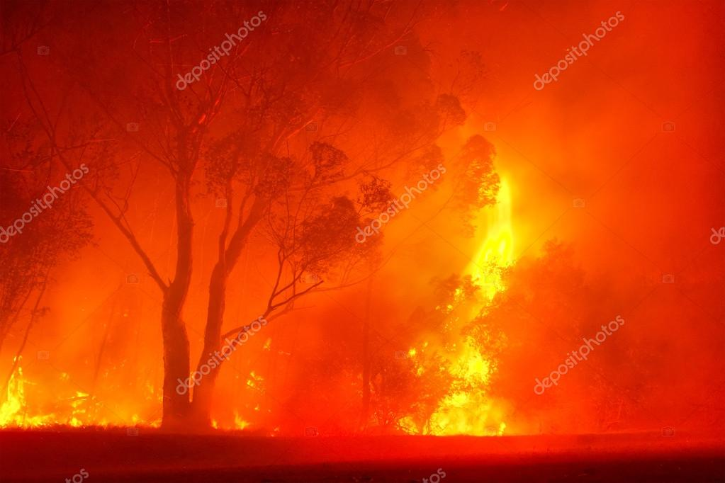 Forest fire in night