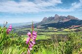 Rózsaszín vadvirágok-hegység
