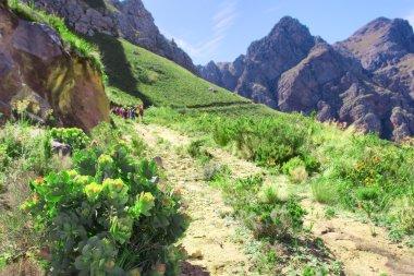 Wild flowers next to trail