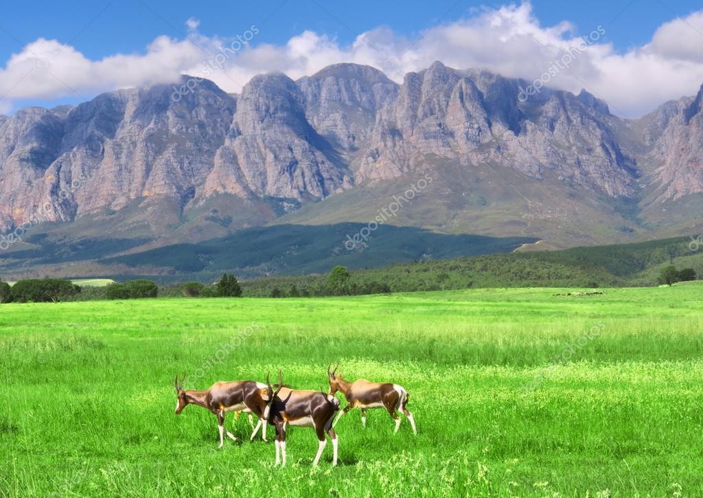 Antelopes, lawn, mountain