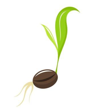 Seedling - newborn plant