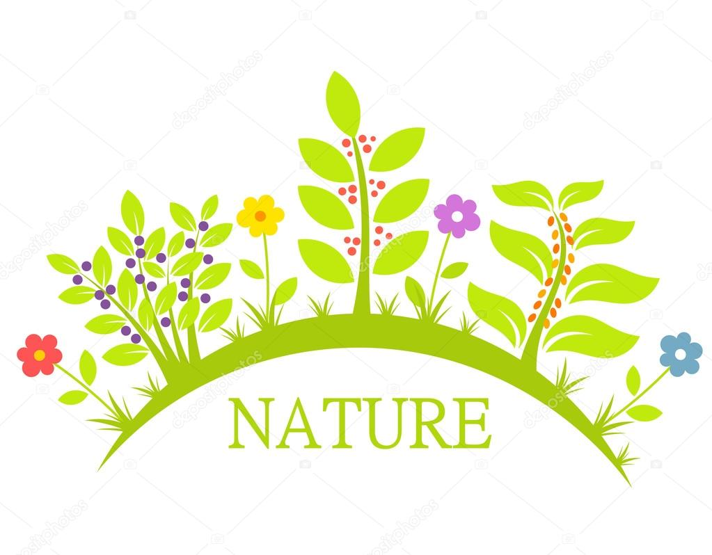 Nature flowers and plants