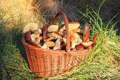 Fotografia funghi in cestino