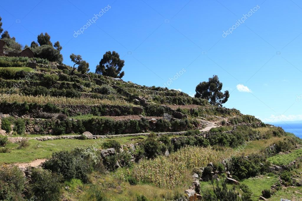 Aldea Y Terraza De Cultivo En La Isla Taquile Lago Titicaca