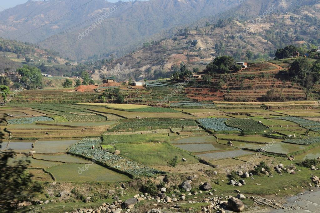 Terraza De Cultivo En Nepal Foto De Stock Hecke06 46466117