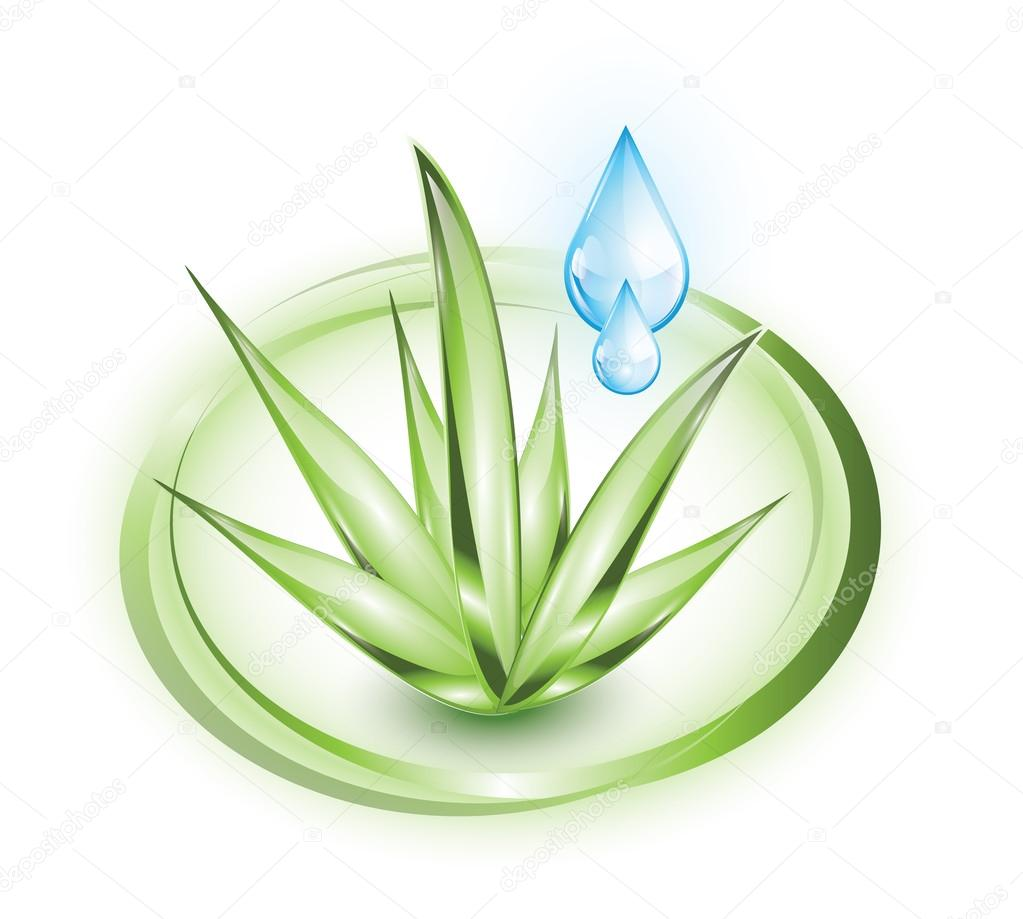 Aloe vera with blue drop