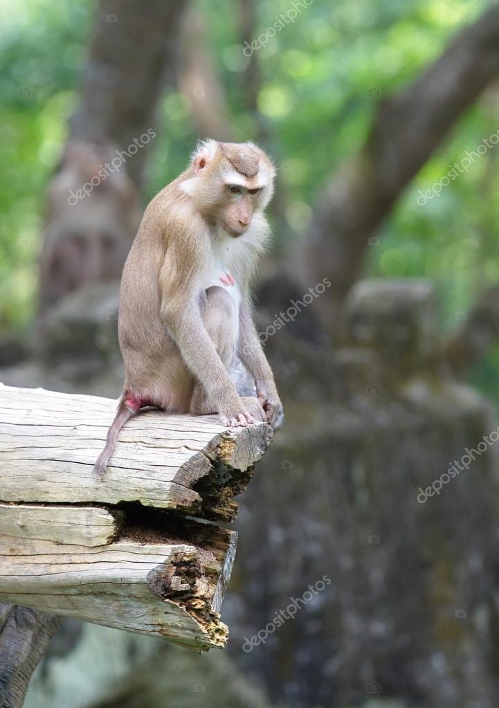 nice wild monkey