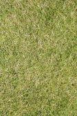 Fotografia Close-up di erba verde
