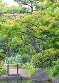 Zelený japonská zahrada