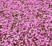Fényképek Gyönyörű virágok fali