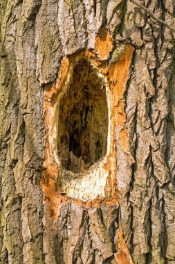 A woodpecker pecked a hole in the tree