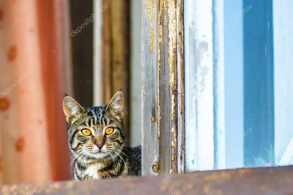 kat, zittend op het venster met de rode en blauwe gordijnen ...