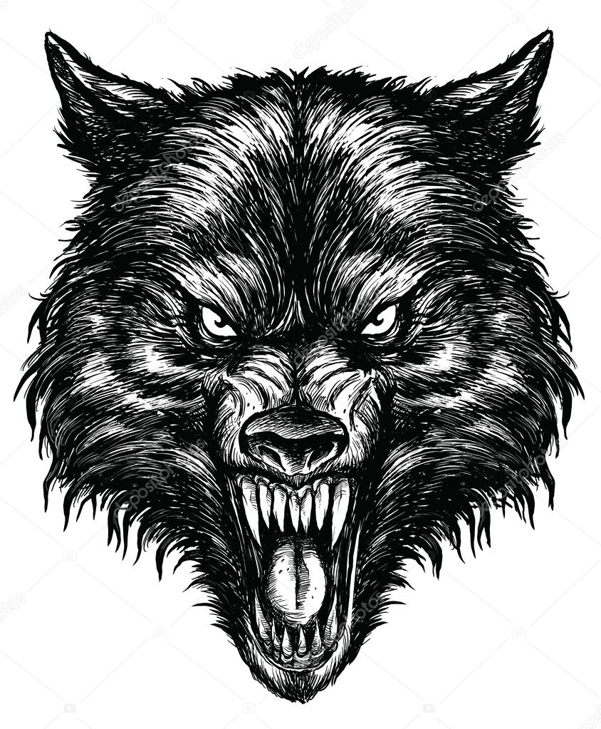 Hand Drawn Wolf — Stock Vector © m.j.h1nkle #27056759