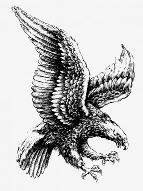 Swooping Tattoo Eagle