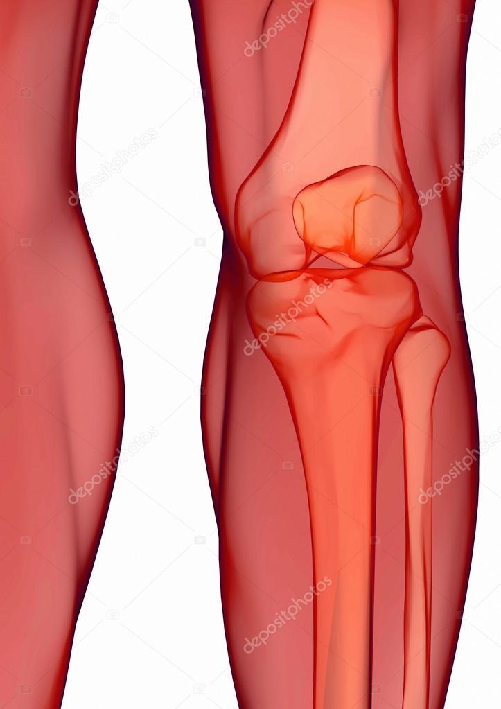 anatomía humana de la rodilla — Foto de stock © ingridat #29276307