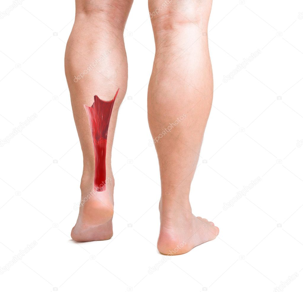 Achilles Tendon With Lower Leg Muscles Stock Photo Ingridat