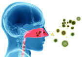 Pylové alergie. senná rýma