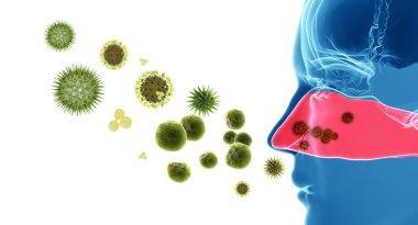 Pollen allergy. Hay fever