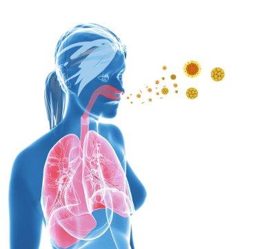 Pollen allergy or hay fever