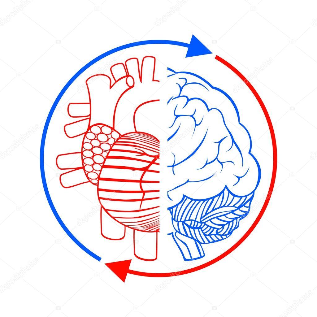 Kommunikation im Gehirn und Herz — Stockfoto © sudok1 #48830187