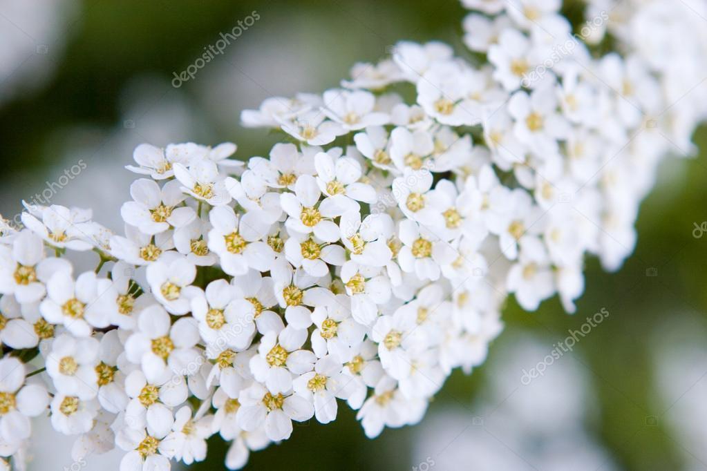 Flores Pequenas Brancas