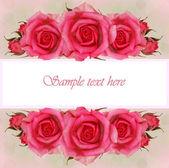 růžové květy růže složení pro přání