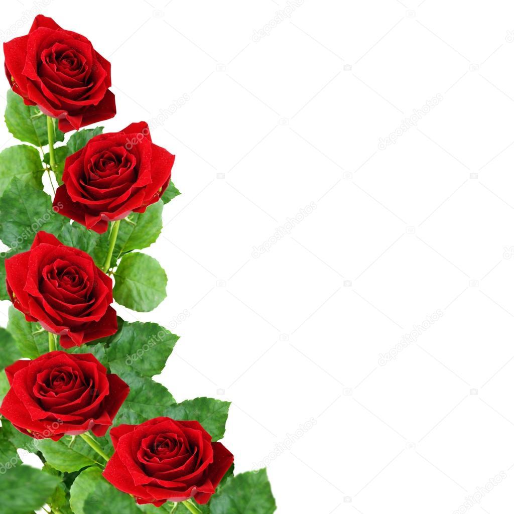 Flores Rosas Rojas Fotos De Stock Ksushsh 41881233