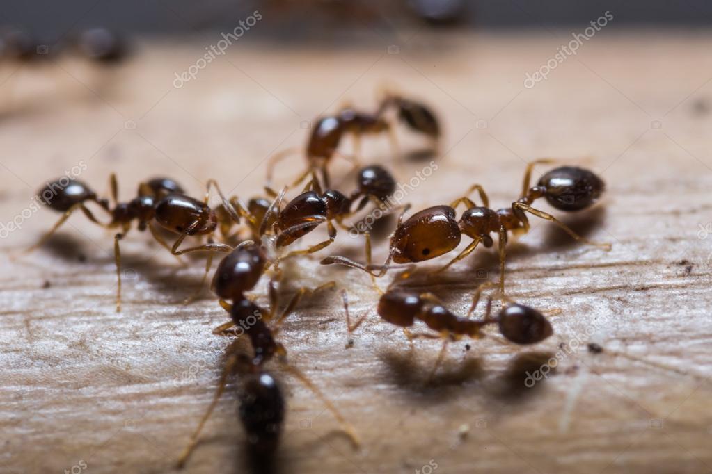 hormigas #hashtag