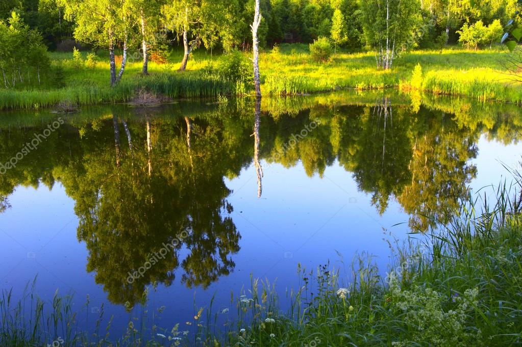 Reflection the sunset forest in a pond