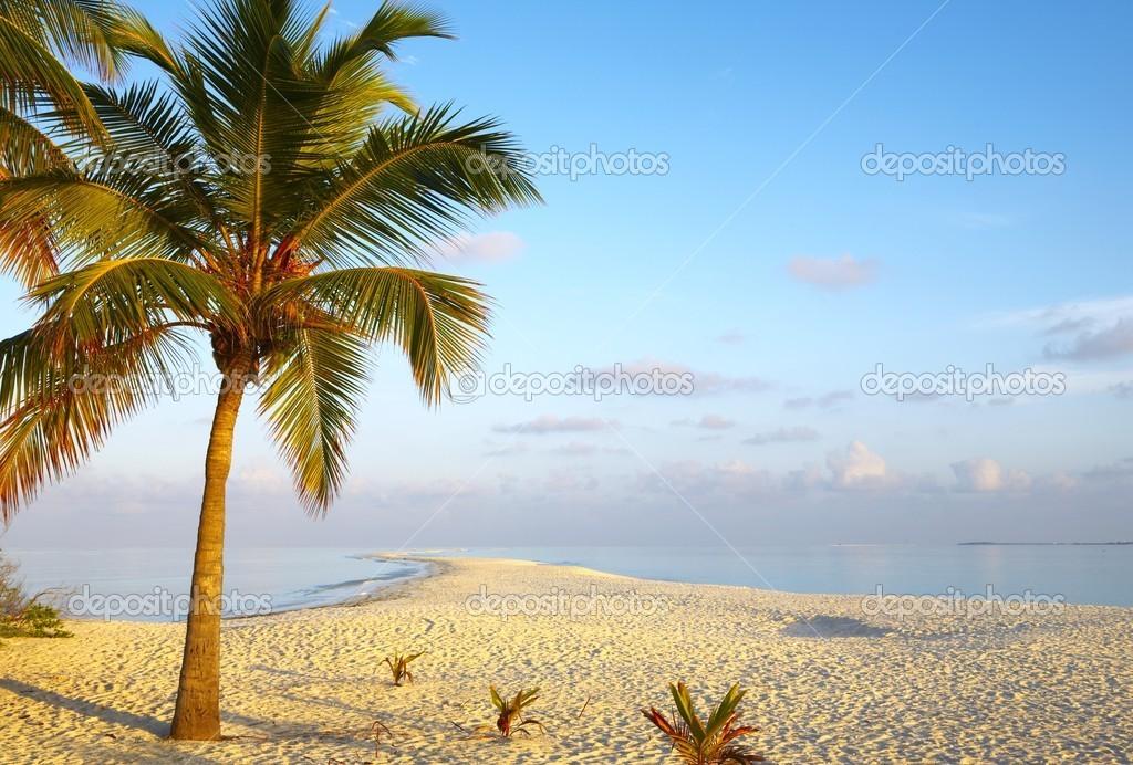 Dawn tropical beach