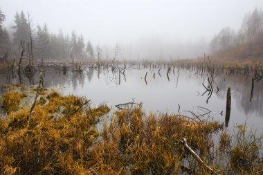 Latvian Landscape