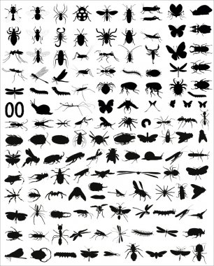 Big collection of 133 different vector insects silhouettes