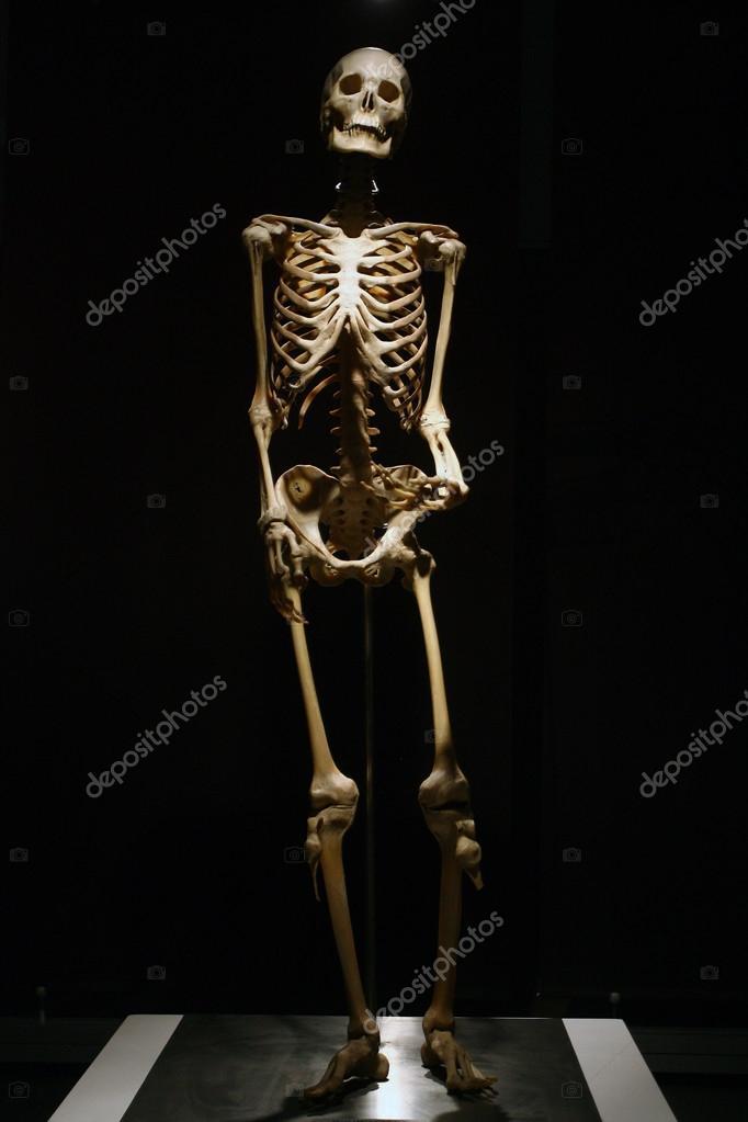 Human Anatomy Real Skeleton On A Black Background Stock Photo